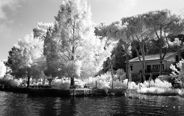 Photo de notre propriété, prise l'été en infrarouge.<br />A gauche : la splendeur épanouies des pins du Mississippi.<br />A droite : les pins parasols qui semblent surplomber notre maison<br />.2 août 2014