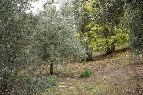 Sur le côté gauche, dans la deuxième partie de la grimpée de la strada San Michele Arcangelo.