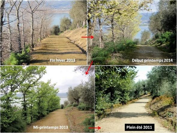 Les changements de physionomie du haut de la strada di San Salvatore, de saison en saison.