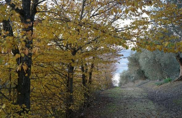 Photo de la strada di San Salvatore, un peu avant le lieu d'inflexion de sa pente.De part et d'autre,  se dressent deux rideaux d'arbres aux couleurs très contrastées, mais avec la même tonalité douce et apaisante.