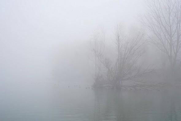 Mon point d'arrivée à l'Isola Maggiore.A babord, les arbres partiellement immergés de la pointe nord.