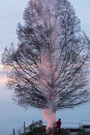 Sa fumée créee finalement une image très poétique avec la collaboration d'un de nos pins du Mississippi...