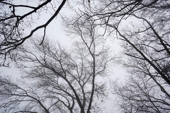 Une portion de la voûte hivernale du lungolago :Une architectonique sylvestre soutenant un dôme nébuleux !