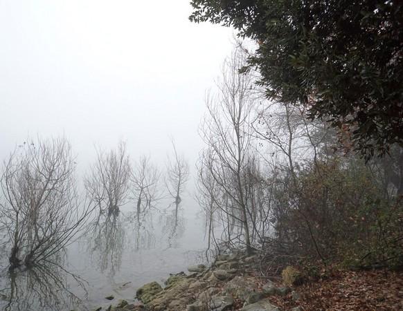Les arbustes immergés dans le lac suite à l'élévation de son niveau ces deux dernières années.