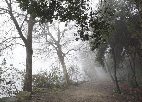 """Le sentier est devenu un large chemin, quasi une """"allée""""..."""