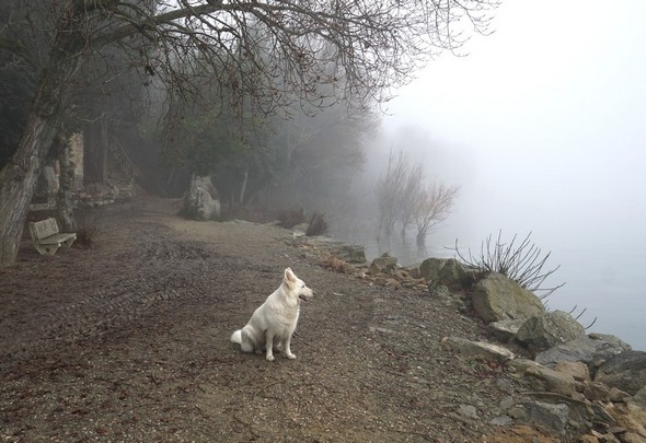 Ma chienne Aïka, associée à toutes mes ballades sur l'Isola Maggiore.