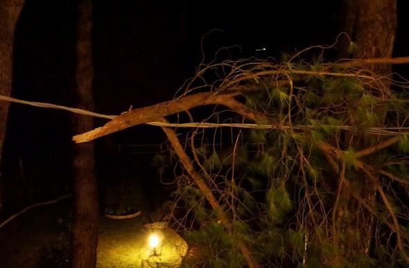 Une grosse branche d'un des superbes pins parasols situés juste devant notre façade avant vient d'être arrachée et s'est accrochée au cable électriquequi court devant notre façade.