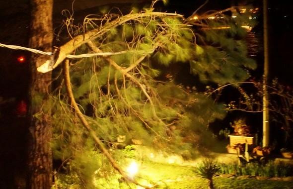 Une fois le jardin allumé, la branche arrachée s'impose à nos yeux à un bon mètre du balcon de mon bureau.