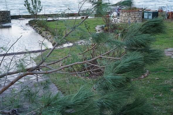 Cristiano vient de réussir à dégager la branche et à la faire tomber au sol.
