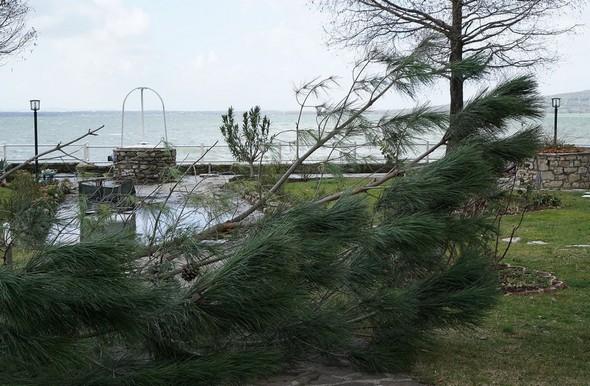 """Sous cet angle, la branche dissimule partiellement l'habituel """"bassin d'orage"""" qui se forme dans notre jardin lors des orages ou lors  du franchissement de notre digue par des vagues trop fortes."""