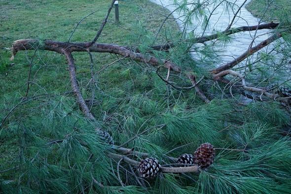 Détail de cette grosse branche.