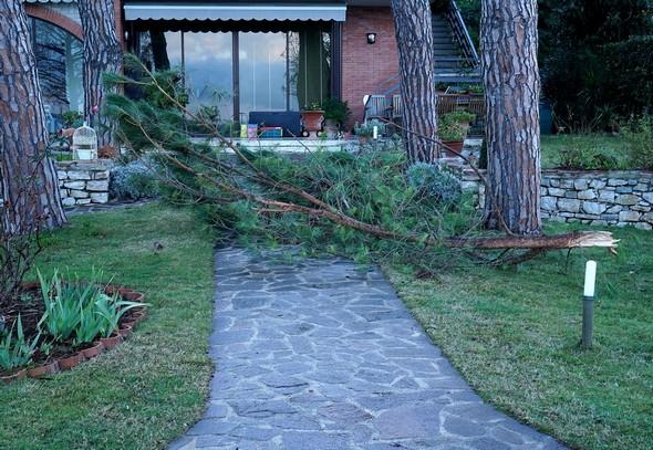 La branche tombée barre encore toute la largeur du chemin.Cette photo permet bien d'en apprécier la taille.