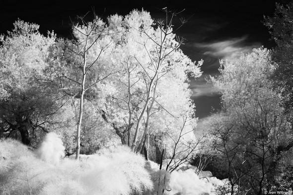 Sur un des côtés de la strada di San Michele Arcangelo.<br />En bas de la photo (partie gauche),  à l'avant-plan, le massif des férules communes ressemblent à un amas neigeux en photographie infrarouge.<br />Au centre, les hautes hampes florales du printemps dernier sont réduites à l'état de squelettes dénudés.<br />15/03/2016.