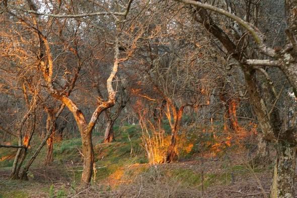 En direction du coeur flamboyant de l'oliveraie...