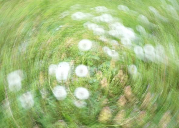Des ronds dans l'herbe...