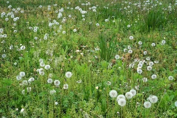 Un simple ptit champ sauvage et joliment fleuri...