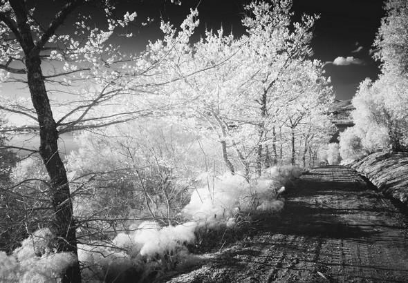 La strada di San Salvatore descend doucement le long du versant ouest de l'Isola Maggiore, en directide la chiesa di San Salvatore.A plusieurs endroits, elle offre une vue sur Tuoro-sul-Trasimeno.18/03/2016 - 18:23