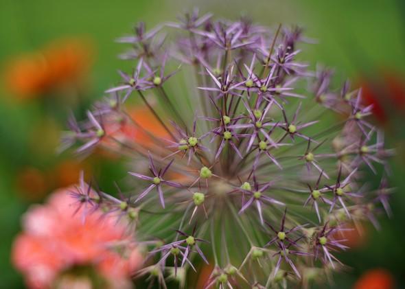 Dans le jardin de Fabienne...