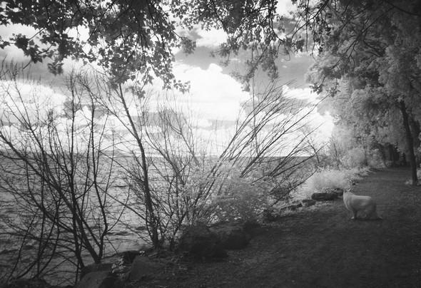 Aïka contemple le lac Trasimène.