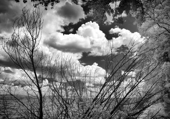Frêle barrière de branchages et lourds nuages menaçants.