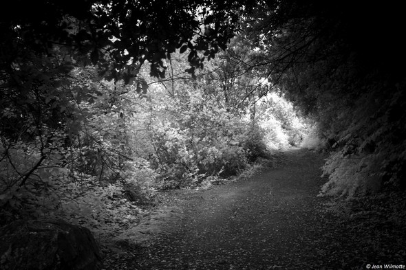 """Nous voilà dans la partie """"sentier"""".Le chemin s'est fort rétrécit.D'un côté, une broussaille épaise nous sépare du Trasimène.Del'autre côté, le versant de la colline boisé et hérissé de nombreux blocs rochers."""