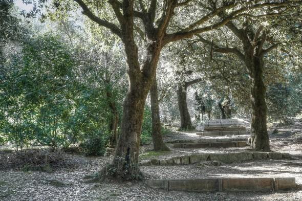 Allée boisée, présentant un certain nombre de marches.Elle unit la viale Marchesa Isabella (à son sommet) à la jonction de la strada panoramica nord au sentiero dei lecci.