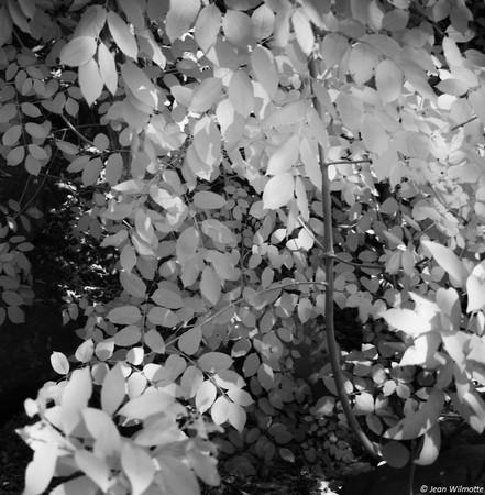 Ruissellement de feuilles.