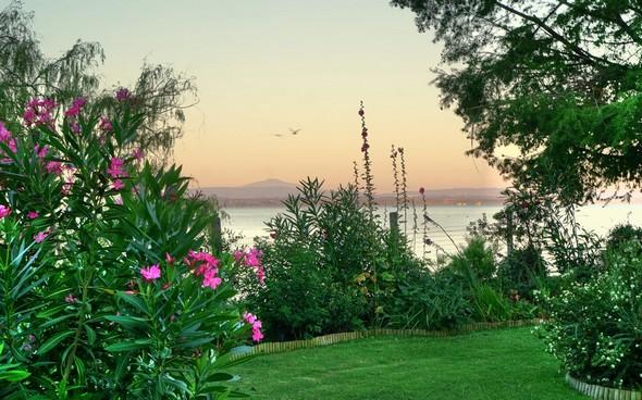 Les fleurs du jardin de Fabienne.Au fond, la rive ouest du Trasimène.Rendu impressionniste.19/07/2016 - 06:01