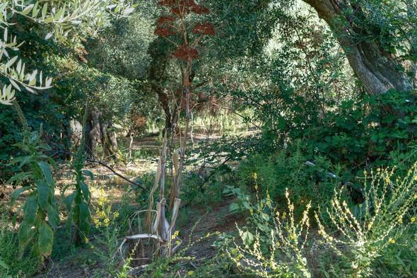 Sur le côté gauche de la strada, un terrain en pente douce contenant une végétation parfois assez drue...