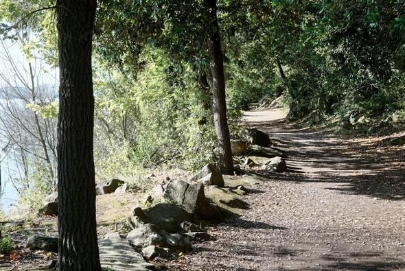 Environ à mi-chemin, nous atteignons la partie du lungolago qui a des allures d' allée forestière.