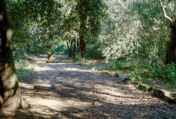 On commence à apercevoir l'extrémité inférieure de cette allée.<br />La barrière tout au fond signe le point de rencontre entra la strada panoramica nord (à gauche) et le sentiero dei lecci (à droite).