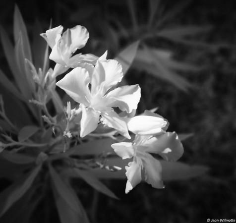 Grand cordon de l'Ordre Floral...