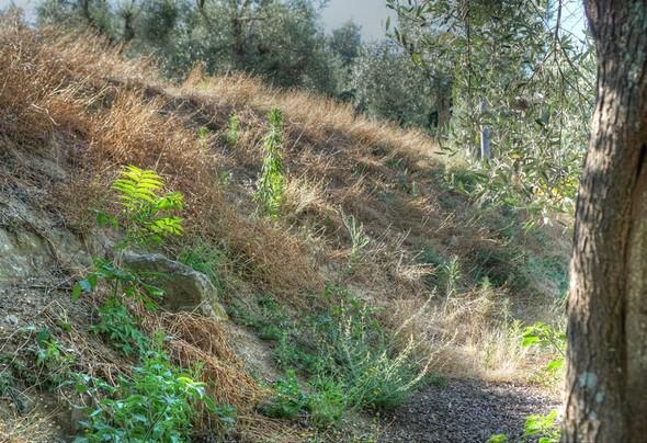 A droite de la strada, départ du sentier appelé stradelle della mura.