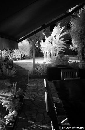 Depuis le coin à manger de la terrasse, vue sur une partie de notre verger.Le bananier irradie de toute sa présence lumineuse.21 juin 2016 - 19:38