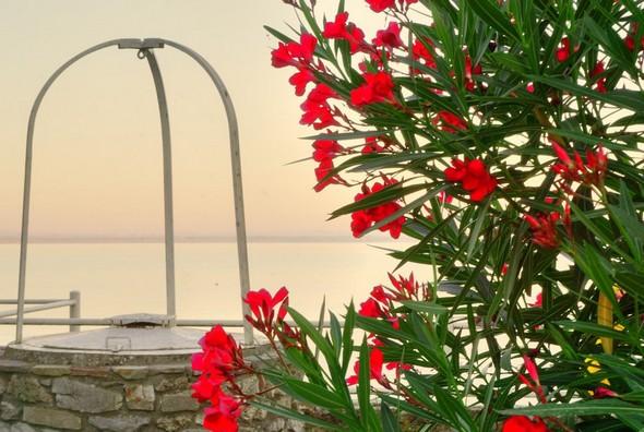 """PHOTO 5Vue sur la rive """"ouest"""" du lac Trasimène."""