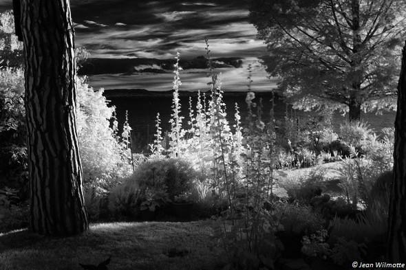 Au coucher de soleil, même prise de vue depuis la terrasse : une partie du jardin et le lac Trasimène !21 juin 2016 - 19:50
