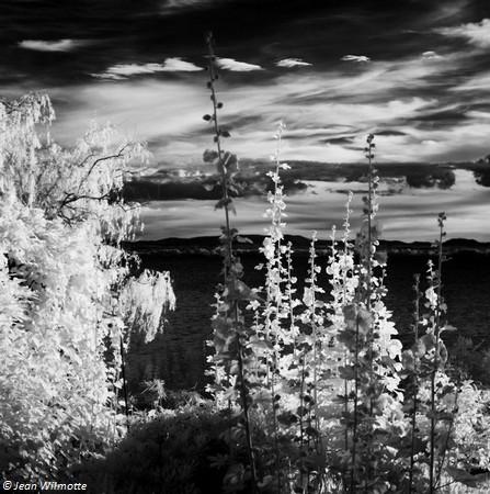 Vue plus rapprochée des roses trémières bien visibles au milieu de la photo précédente.21 juin 2016 - 19:42