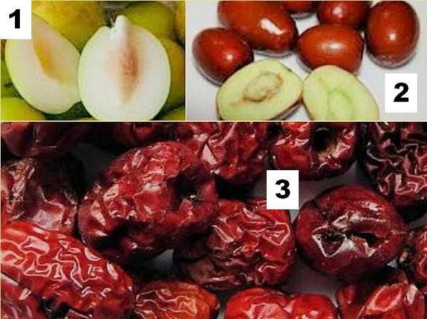 Les trois stades successifs de maturation du fruit.