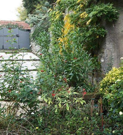 Végétation du haut mur qui borde la rampe d'accès.
