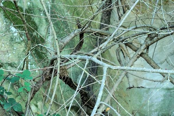 Une photo rapprochée des ramures dénudées, avec un fondu de l'arrière-plan, nous propose presque'un tableau abstrait.