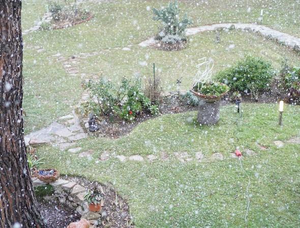 Autre partie de notre jardin.