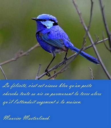 L'oiseau du bonheur, l'oiseau bleu...
