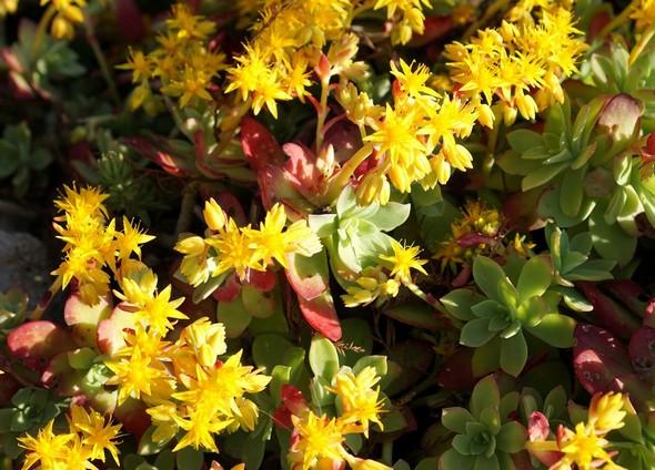 Cadre Decor Fleurs