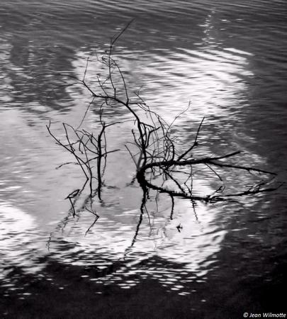 Rond dans l'eau.