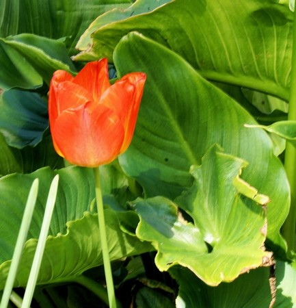 """""""Si nous pouvions percevoir clairement le miracle<br /> que représente une simple fleur,<br />notre vie tout entière changerait.""""<br />Bouddha"""