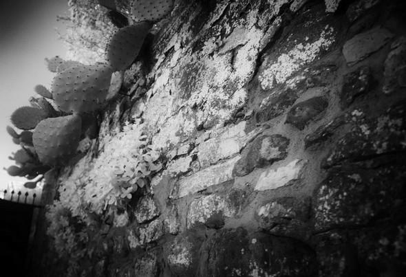 Le mur qui longe notre entrée.Partiellement décoré de cactus et de câpriers.