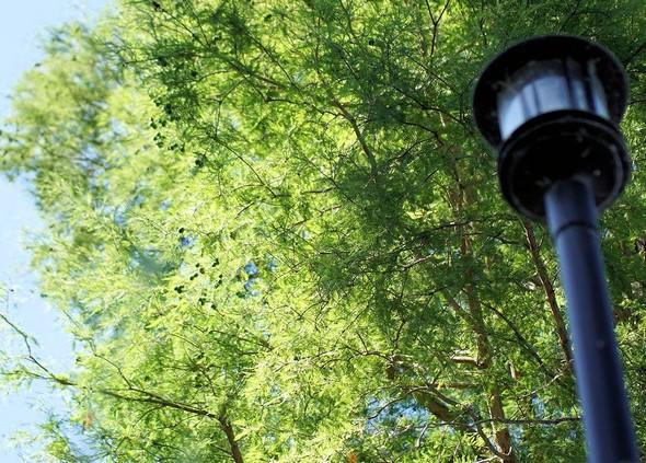 Photo prise depuis le pied d'un réverbère du jardin.
