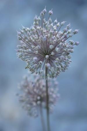 <strong>Photo prise du pied d'une fleur à haute tige.</strong><br /> Bokeh.