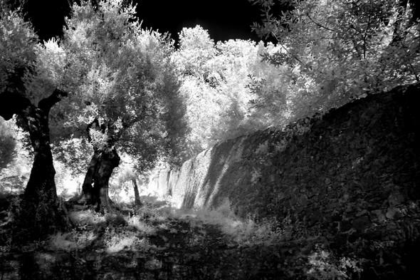 A gauche, début de la petite oliveraie.0 droite, le mur d'enceinte qui s'éloigne.
