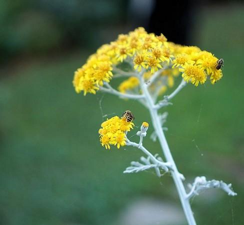 Profil avec deux insectes.